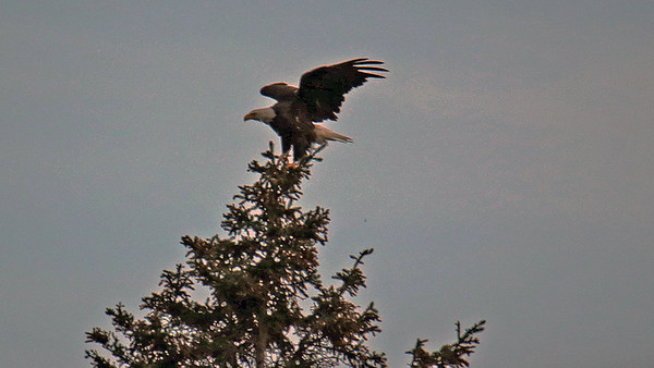 Lake Clark Eagles