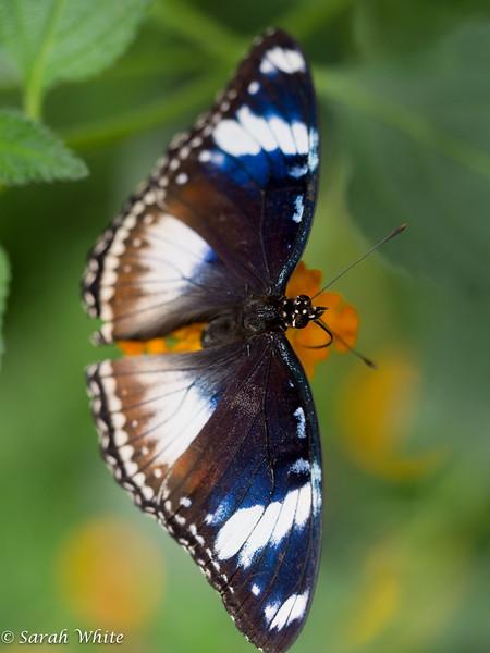 140503_ButterflyHouse_381.jpg