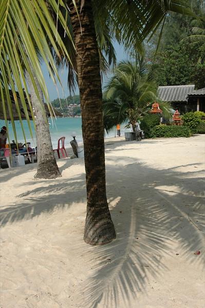 Palm Tree Shadows - Haad Yao, Thailand