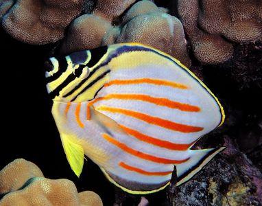 Fish Hawaii