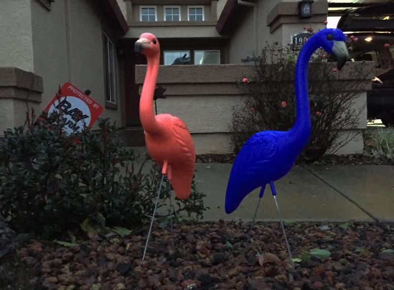 flamingos against the wind.jpg