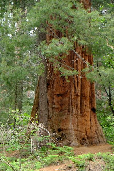 California Day 6 Sequoia 05-30-2017 38.JPG
