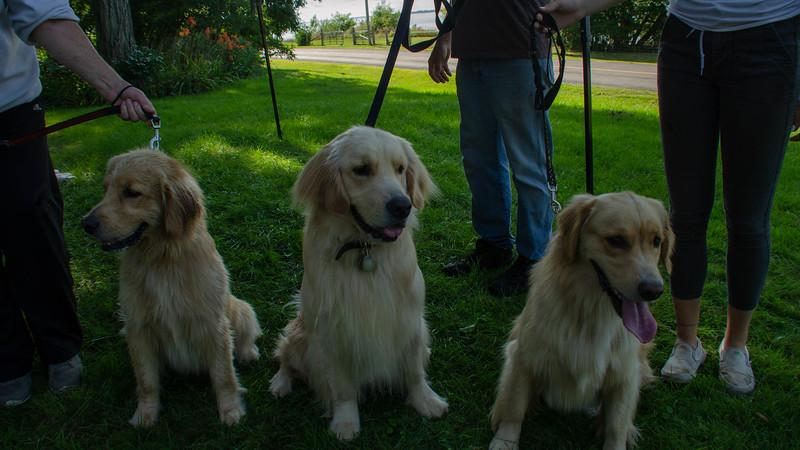 PuppyParty18-575.jpg