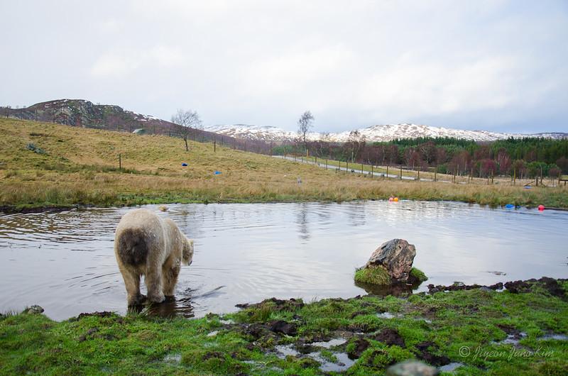 Scotland-Highland-8858.jpg