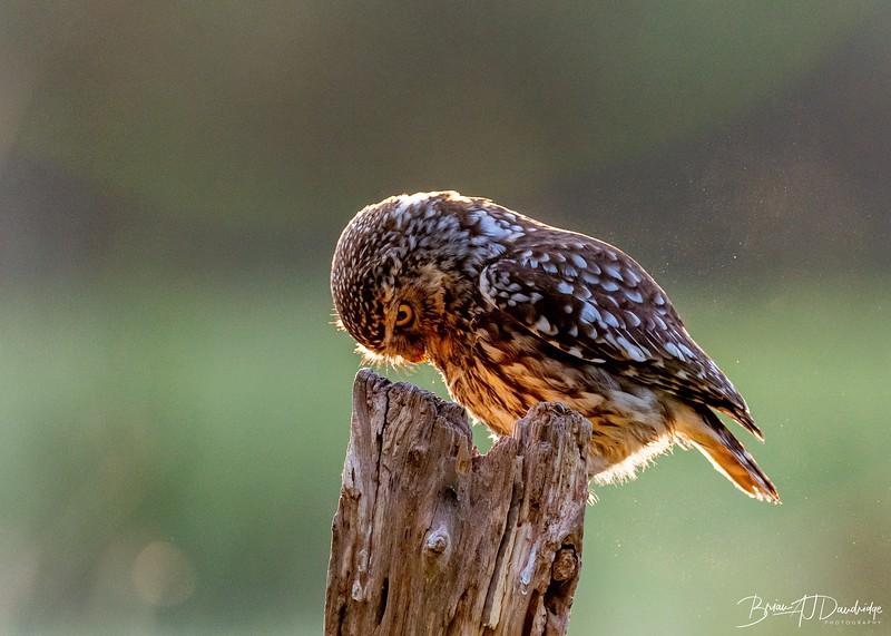 The Little Owl Shoot-6069.jpg