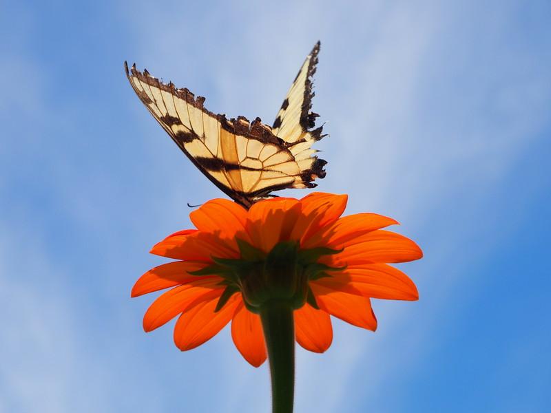 Gravity Hill butterfly 2.JPG