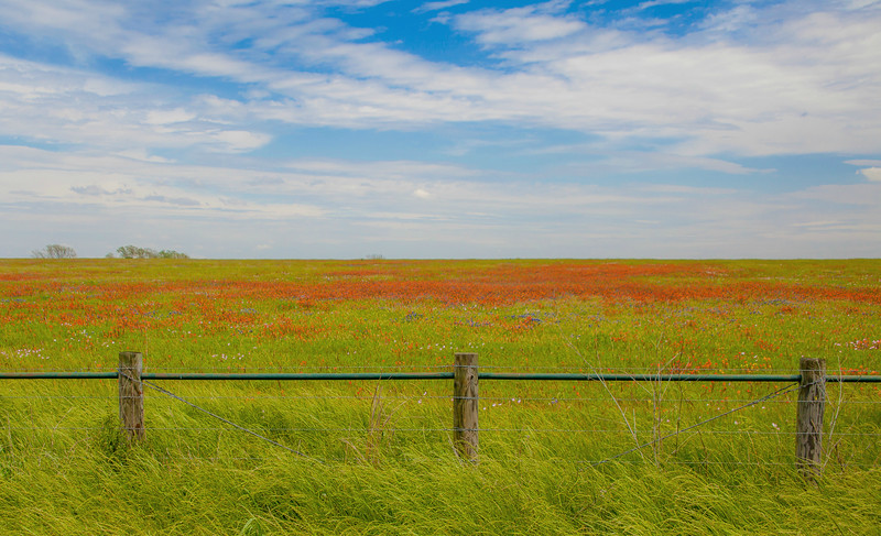 2016_4_9 Texas Wildflower Shoot-8483.jpg