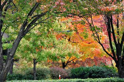 Atlanta Fall 2010