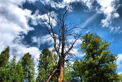 Yellowstone Day2