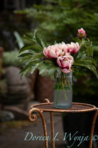 Paeonia x 'RTPIV791-38' Caroline Constabel - Peony cut flowers_1216.jpg