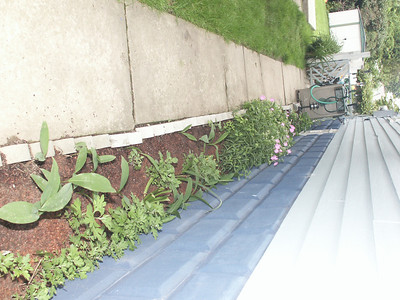 2003 Crystal's garden