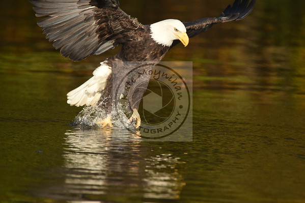 Discover the James Eagle Tour 11-5-16