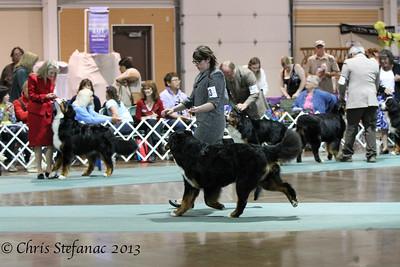Sweeps 15-18 Puppy Dog BMDCA 2013