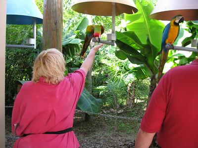 Parrot Jungle (12/18/2006)