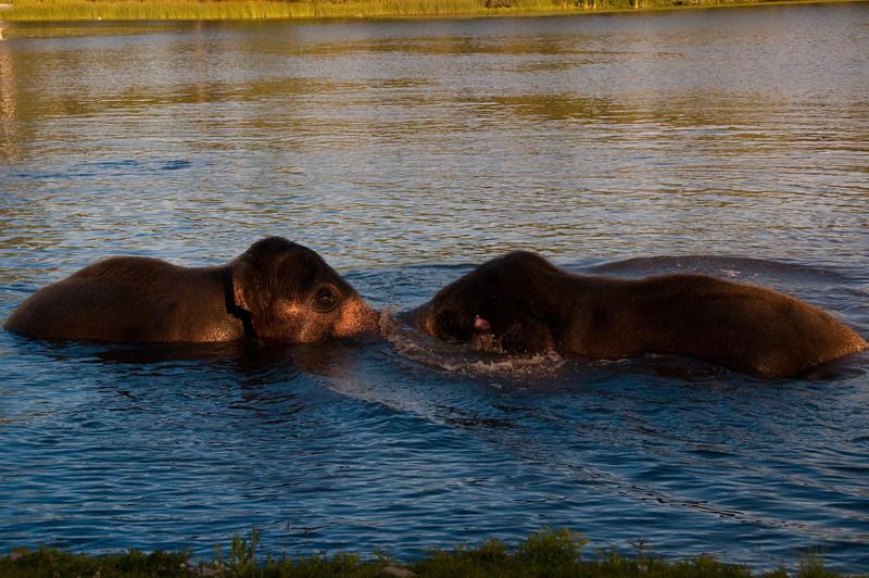 african safari Park-Canada-15.jpg