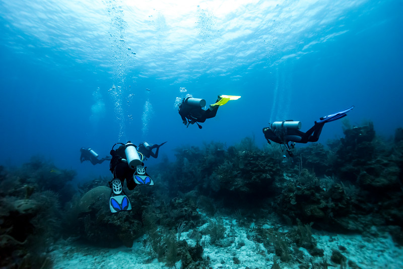 Scuba divers underwater around coral reefs, Majestic Point, Turneffe Atoll, Belize Barrier Reef, Belize