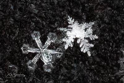 snowflakes-1271.jpg