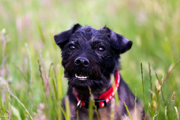 Summer Portrait Shoot - Dog Tess