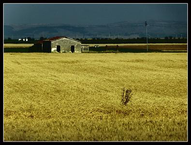 Puglia - la campagna