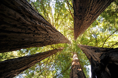 Big Basin Redwoods State Park, Boulder Creek, CA