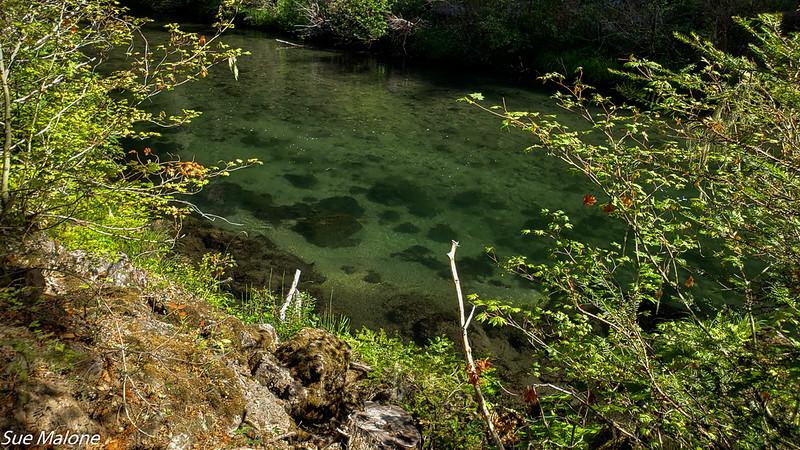 08-19-2020 Hiking Rogue River Gorge-10.jpg