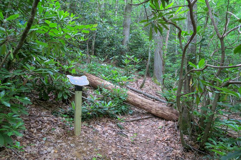 Green Mountain Trail -- 3,110'