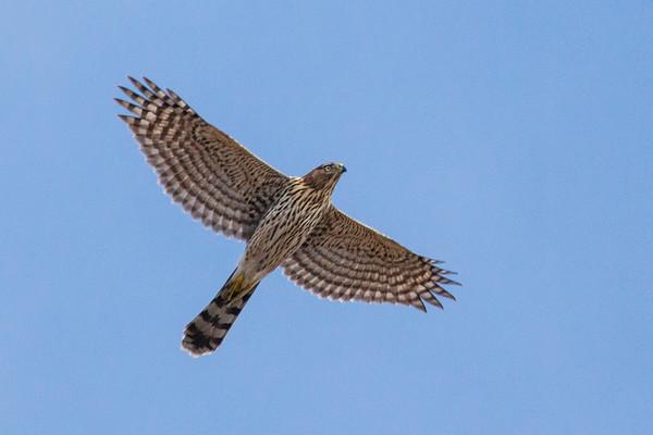 Intro to Ornithology - Field Trip#3  Hawk Hill