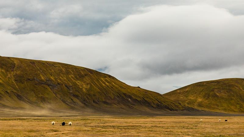 Iceland19_-1782.jpg