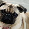 Animals & Pets :