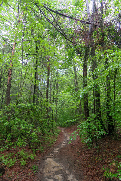 Lower Sidehill Trail -- 2,360'