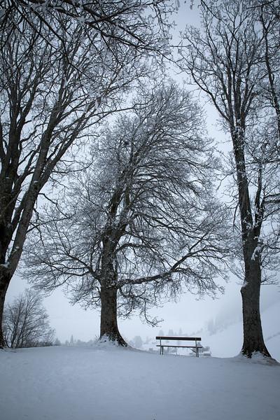 winter-einsiedeln-baueme.jpg