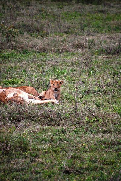 Ngorongoro (245).JPG