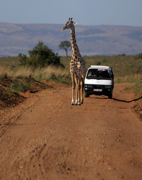 On Safari in Masai Mara Reserve, Kenya, November 19, 2005