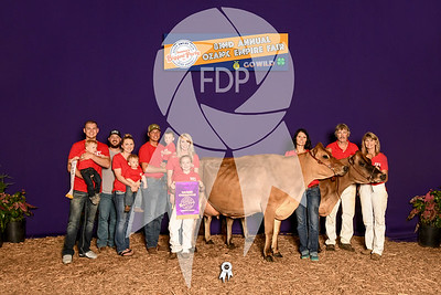 Dairy Cattle Shows