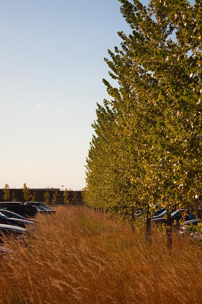 Meadow Parking