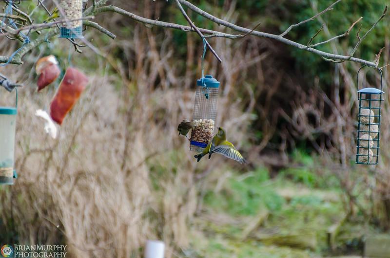 Birds 050218-2.jpg