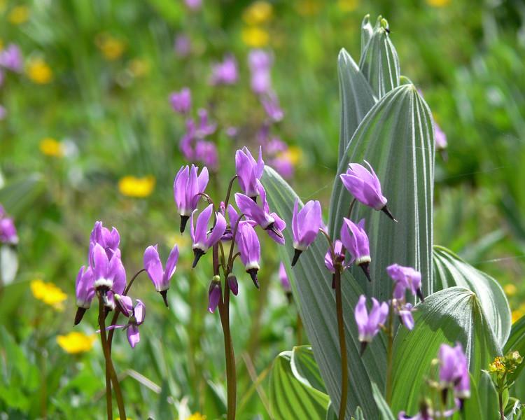 wildflowers18.jpg