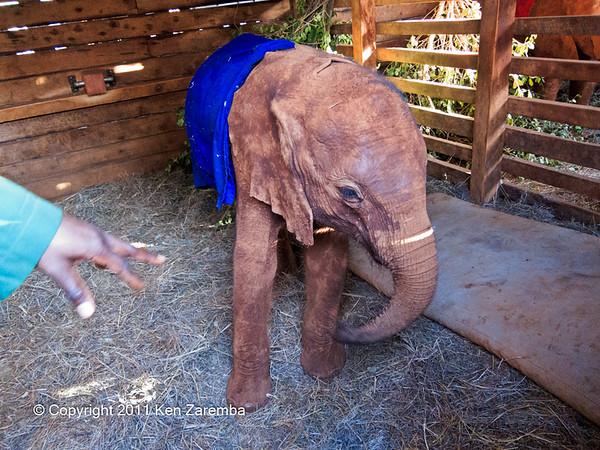 Nairobi/Elephant Orphanage