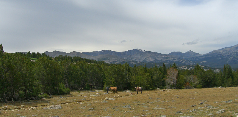 horses on trail.jpg