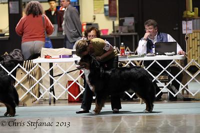 Futurity 15-18 Puppy Dog BMDCA 2013