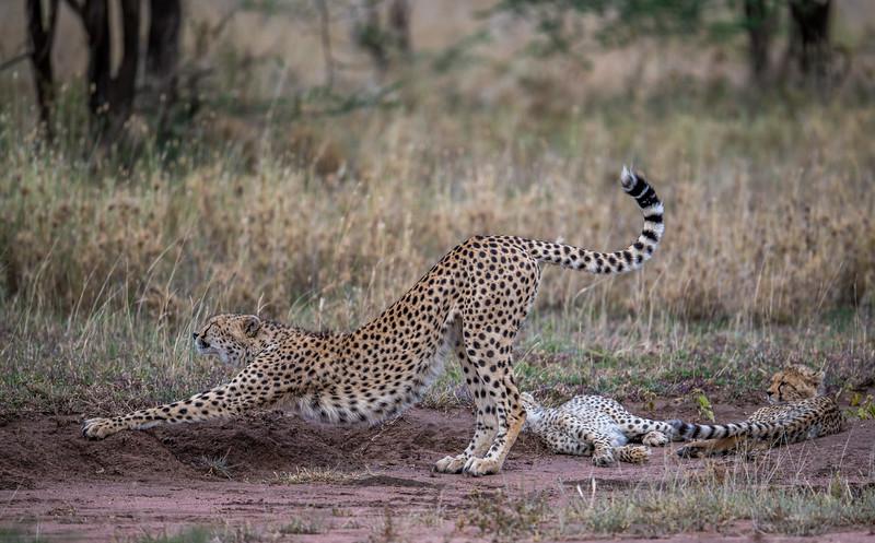 Tanzania_Feb_2018-1166.jpg