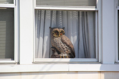 Owl in Window, Cedar St, Tamaqua (8-21-2013)