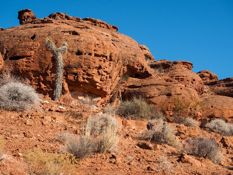 Red Hills Desert Garden in St. George, Utah