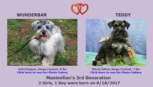 Wunderbar & Teddy Puppies, DOB 6/18/2017