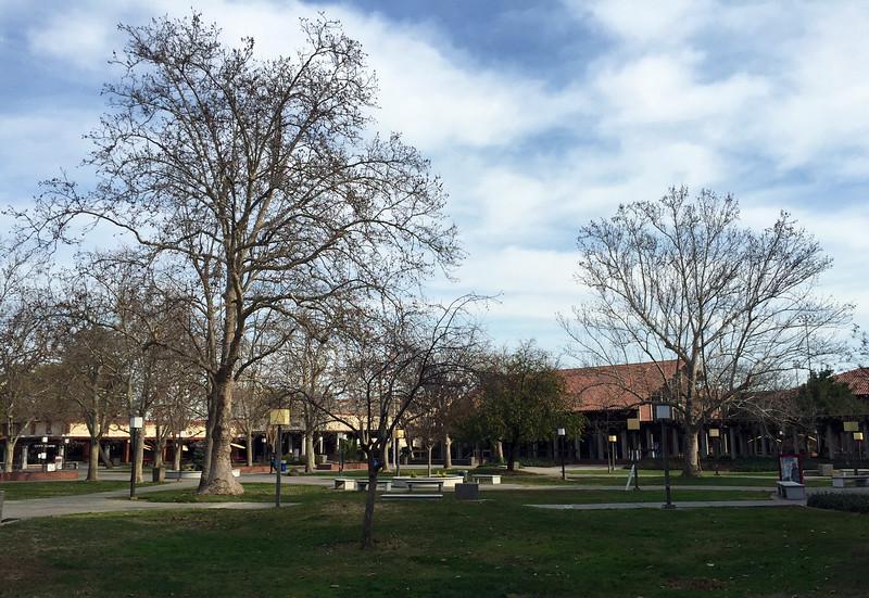 campus january.jpg
