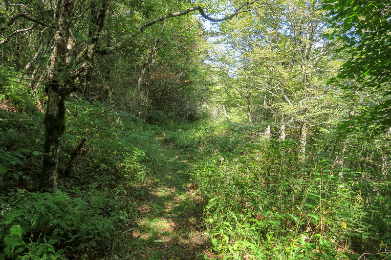 Fork Mountain Trail -- 5,670'