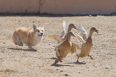 Ducks - Partial