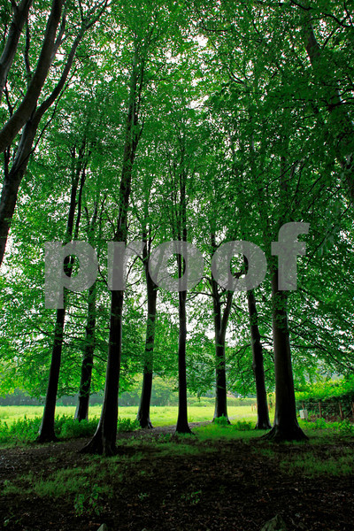 Trees(Ireland,Wales,Engand):Pack 1