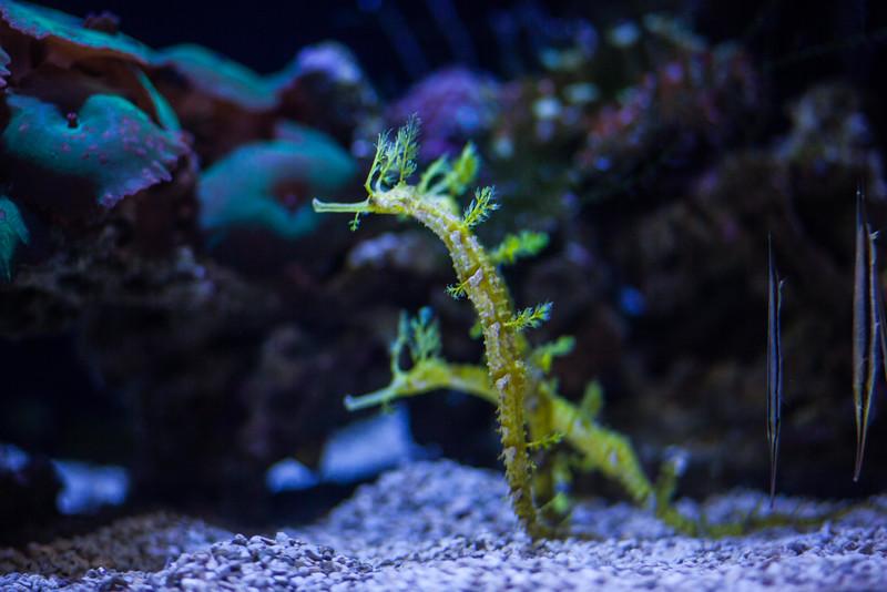 2014 10 25 Dallas World Aquarium-73.jpg