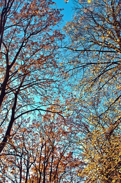 Fall at Minnehaha Park